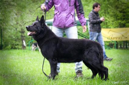 Восточно-европейская овчарка: Alkhabor