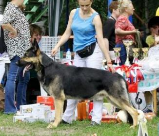 East european shepherd: Garseniy