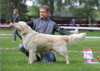 Golden retriever: Skandi Sanraiz Leonardo